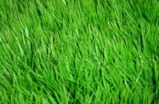 grass-603